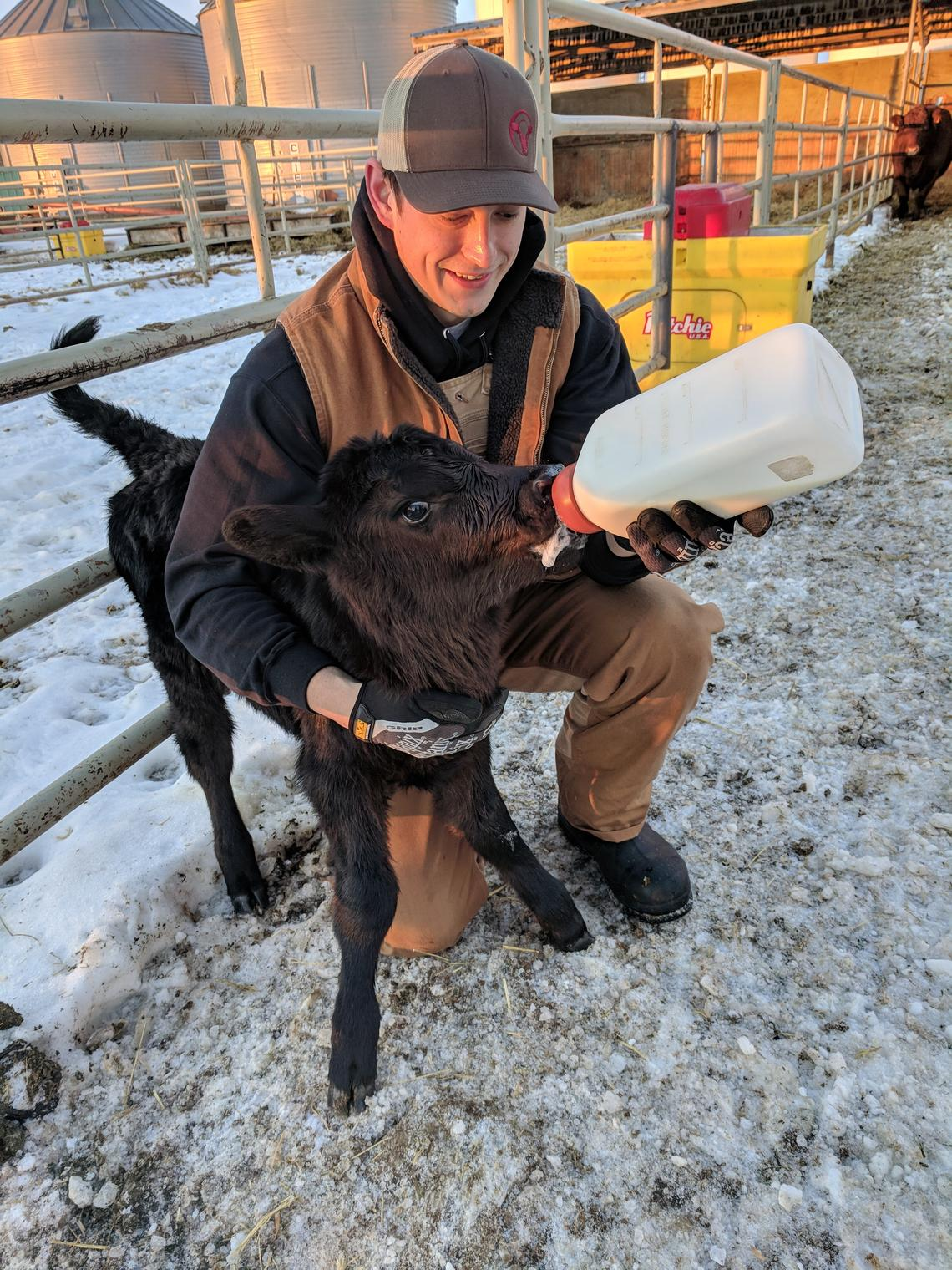 Erik Burow, University of Calgary Veterinary Medicine Class of 2019, credits great mentors for fuelling his interest in cattle health.