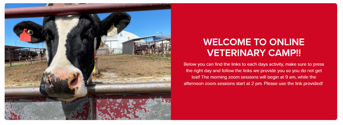 Welcome to online veterinary camp!