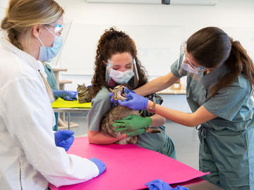 First year students learn clinical skills for both feline and canine patients.
