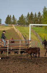 From health to safety, range riders are responsible for the well-being of the herd.