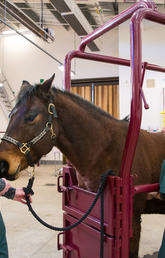 'Amazing' equine athletes inspire newly graduated veterinarians